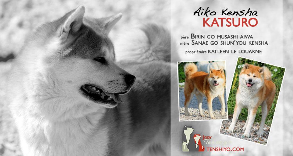 Katsuro-akita-inu-alsace-roux