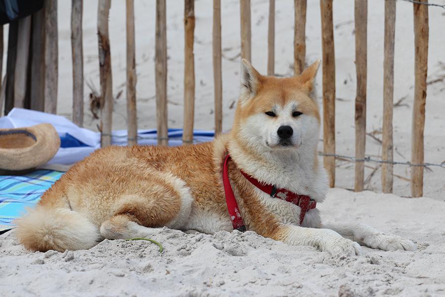 Chiyo à la mer