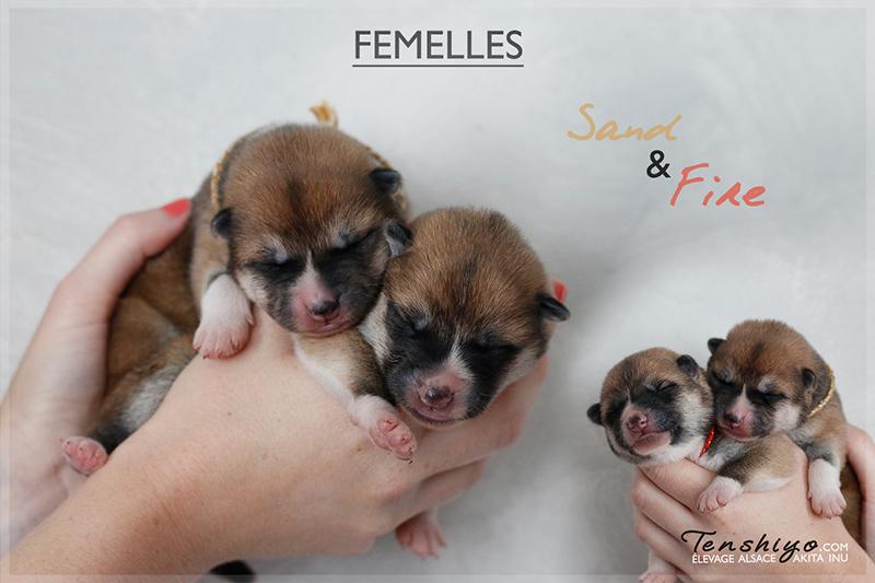 femelles-naissance