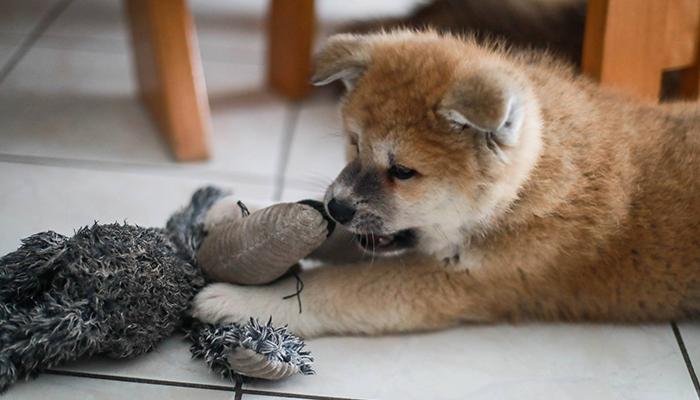 hito-jouet-peluche-chien-kong