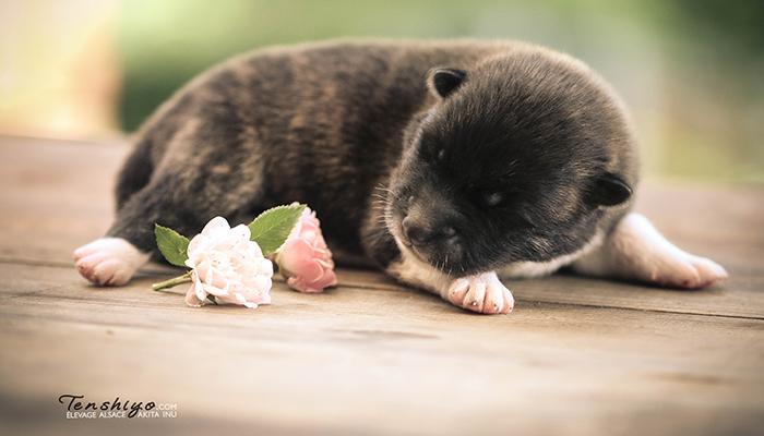 mai-rose-naissance