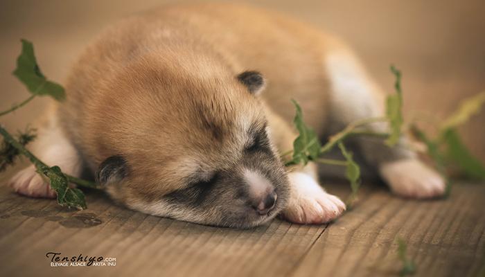 mitsu-naissance-male-roux