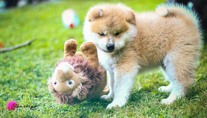 mitsu-peluche-lion