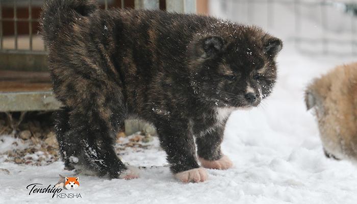 okiko-jura-suisse-neige-froid-hiver