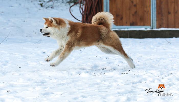 takeo-neige-courir-course-jeu