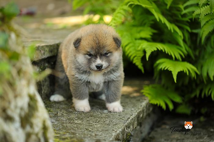 kaeko-4-semaines-femelle