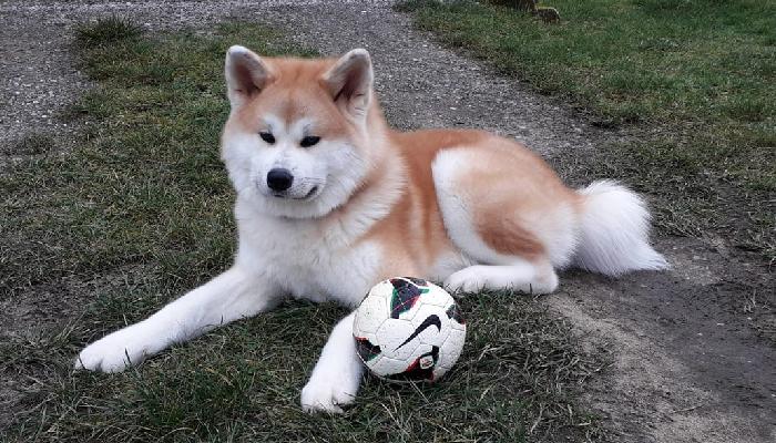 kamiko-strasbourg-ballon-foot