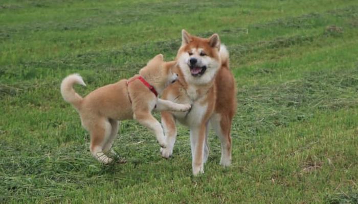 koichi-jeux-canins-strasbourg