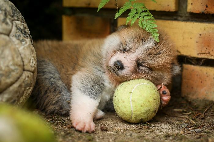 inseki-balle-de-tenis-sieste