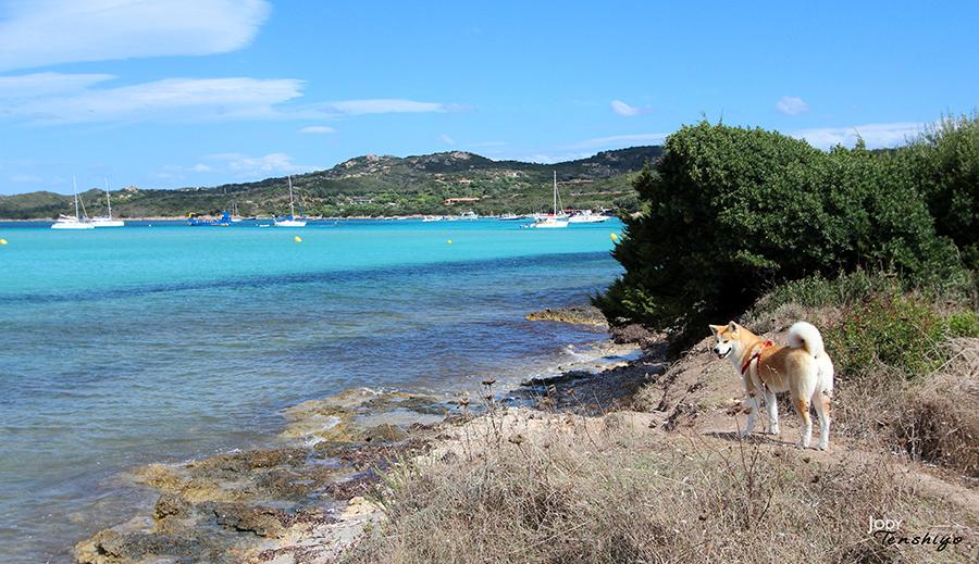 Chiyo en Corse