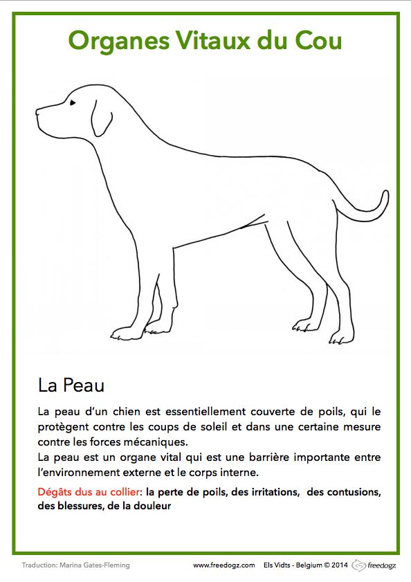 harnais-collier-chiot-chien-2
