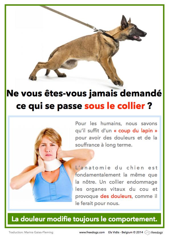 harnais-collier-chiot-chien
