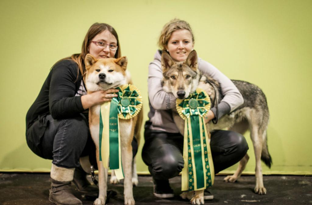 exposition-canin-troyes-2016-saarloos-akita