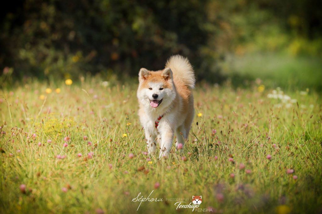himitsu-promenade-pres-champs-fleur