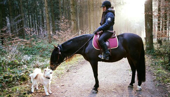 miwako-cheval-socialisaton-amitie
