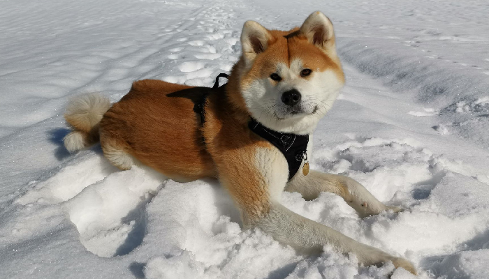 naori-neige-randonnees-promenade