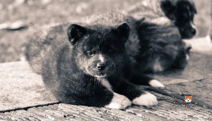 nokutan-noir