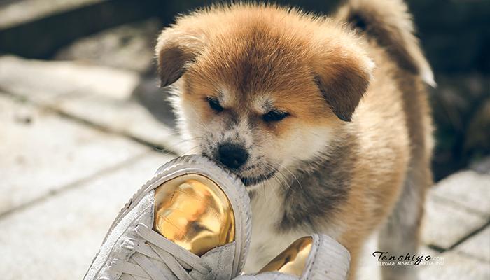 nowaki-chiot-chaussures