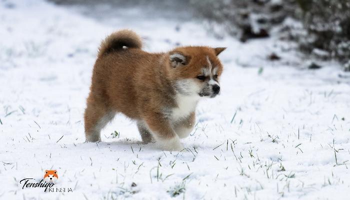 ogawa-neige-marche-suisse-jura