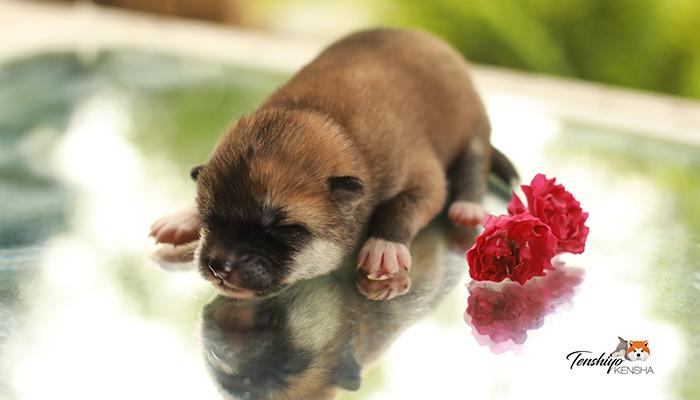 on'na-ours-roux-poil-fourrure-soleil-strasbourg-grosse