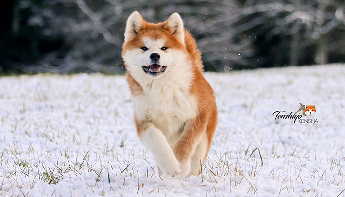 takeo-chiot-neige
