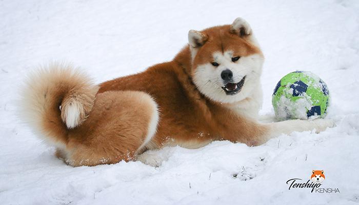 takeo-neige-hiver