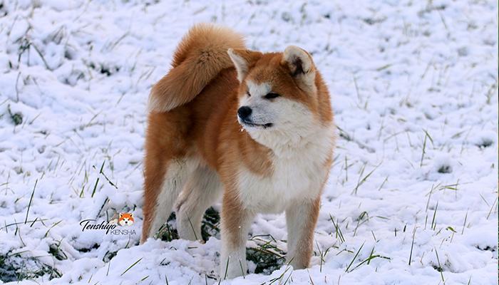 takeo-neige