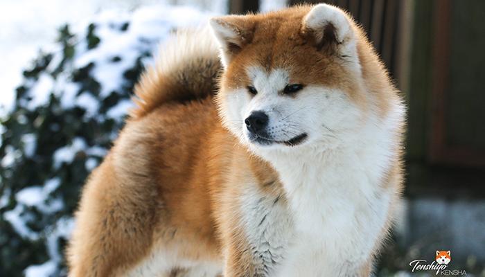 takeo-portrait-hiver