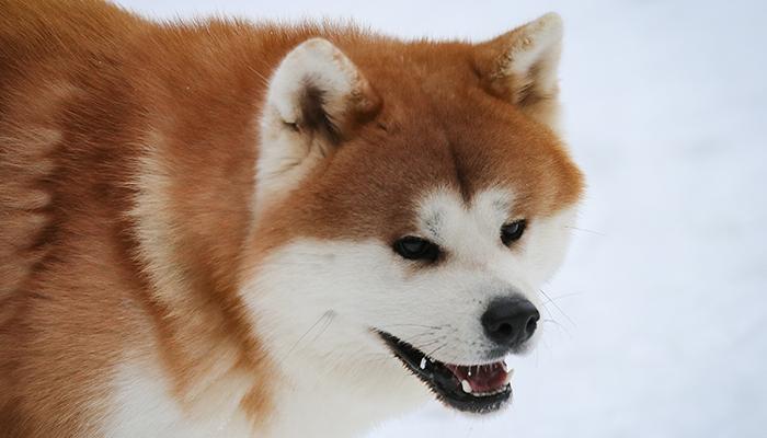takeo-portrait-neige-adulte