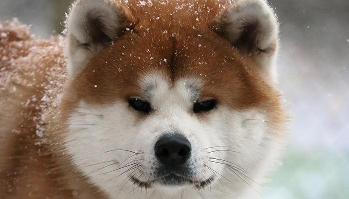 takeo-portrait-neige