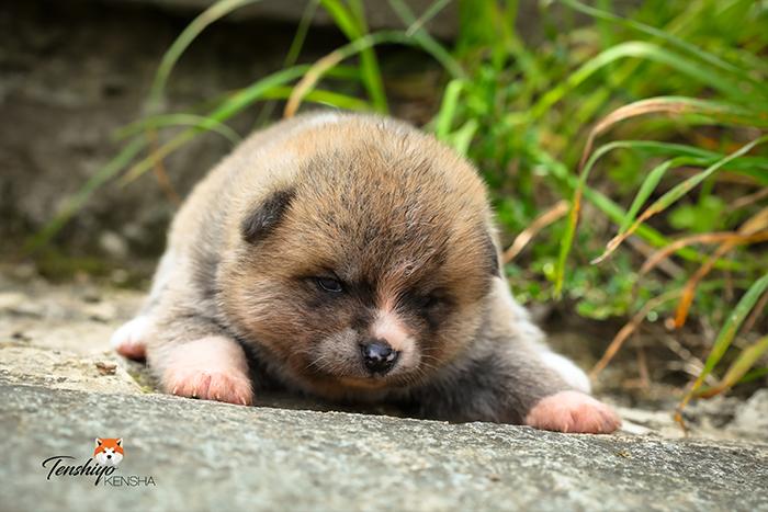 kameko-3-semaines-femelle