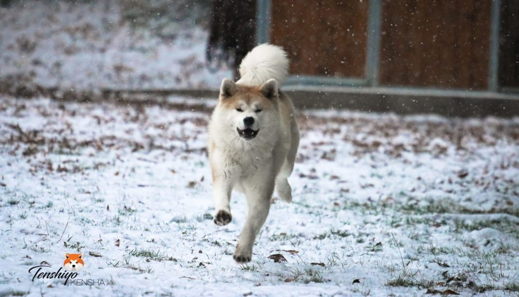 kara-jeux-neige-course-courir