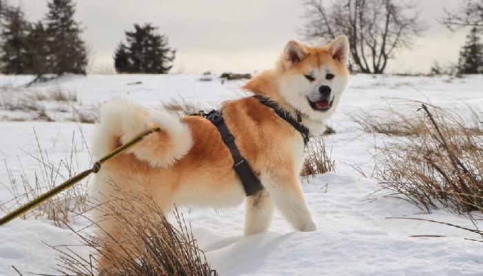koi-neige-fierte