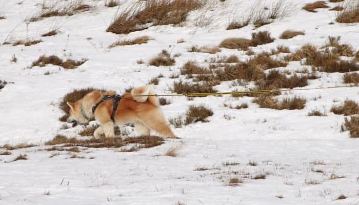 koi-traction-neige-traineau