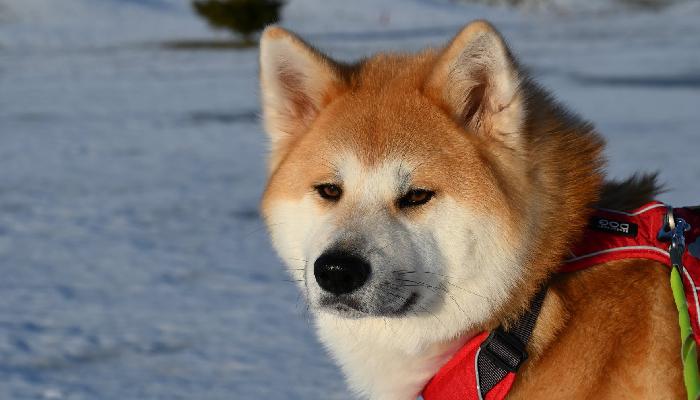 mayoko-neige-vacances