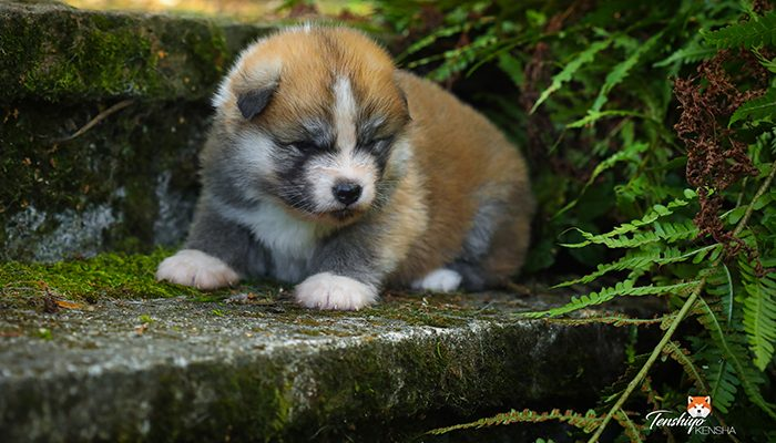 chiot-liste-blanche